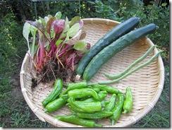 家庭菜園(収穫⑦)