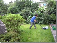 家庭菜園(収穫⑫)