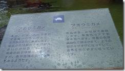 IMGP6646