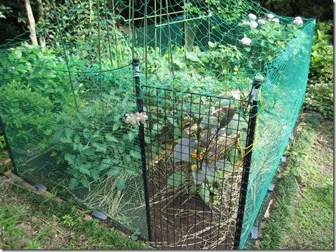 家庭菜園 その後①