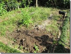 家庭菜園始めました!
