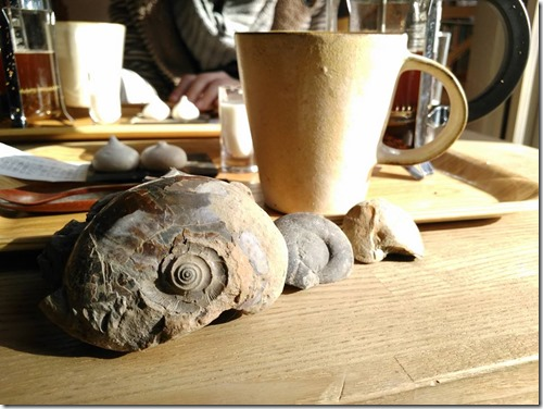 コーヒーとアンモナイト