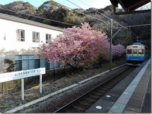 伊豆急全線ウォーク!!!<今井浜海岸駅→河津駅>
