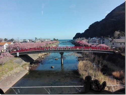 河津桜まつりを楽しむ(撮影日:3月4日)